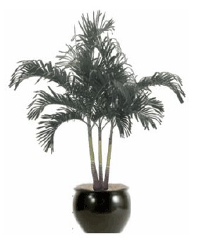 High Light Plant Gallery   Artscape Interior Plant Specialists   Indoor  Plants, Office Plants, Office Plants Service, Indoor Plant Service U0026 Plant  Care ...