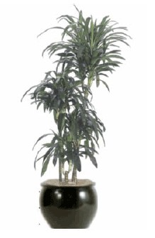 Lisa cane plant care http www artscapeplants com lowlight htm