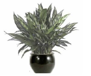 Low Light Plant Gallery Artscape Interior Plant