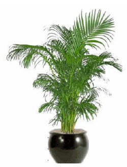 plant specialists indoor plants office plants office plants