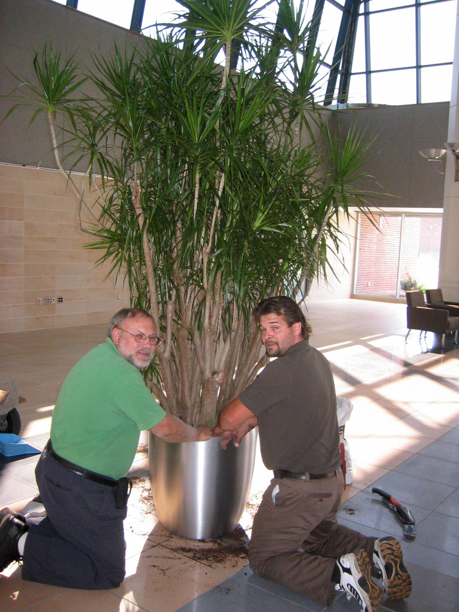 Awesome ... Office Plants   Artscape Interior Plant Specialists ... Design Ideas