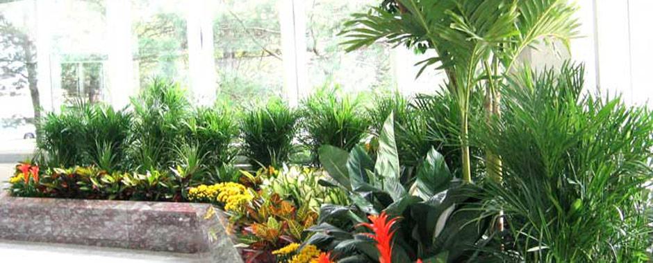 Artscape Interior Plant Specialists